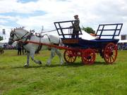Percheron pulling a Suffolk Cart